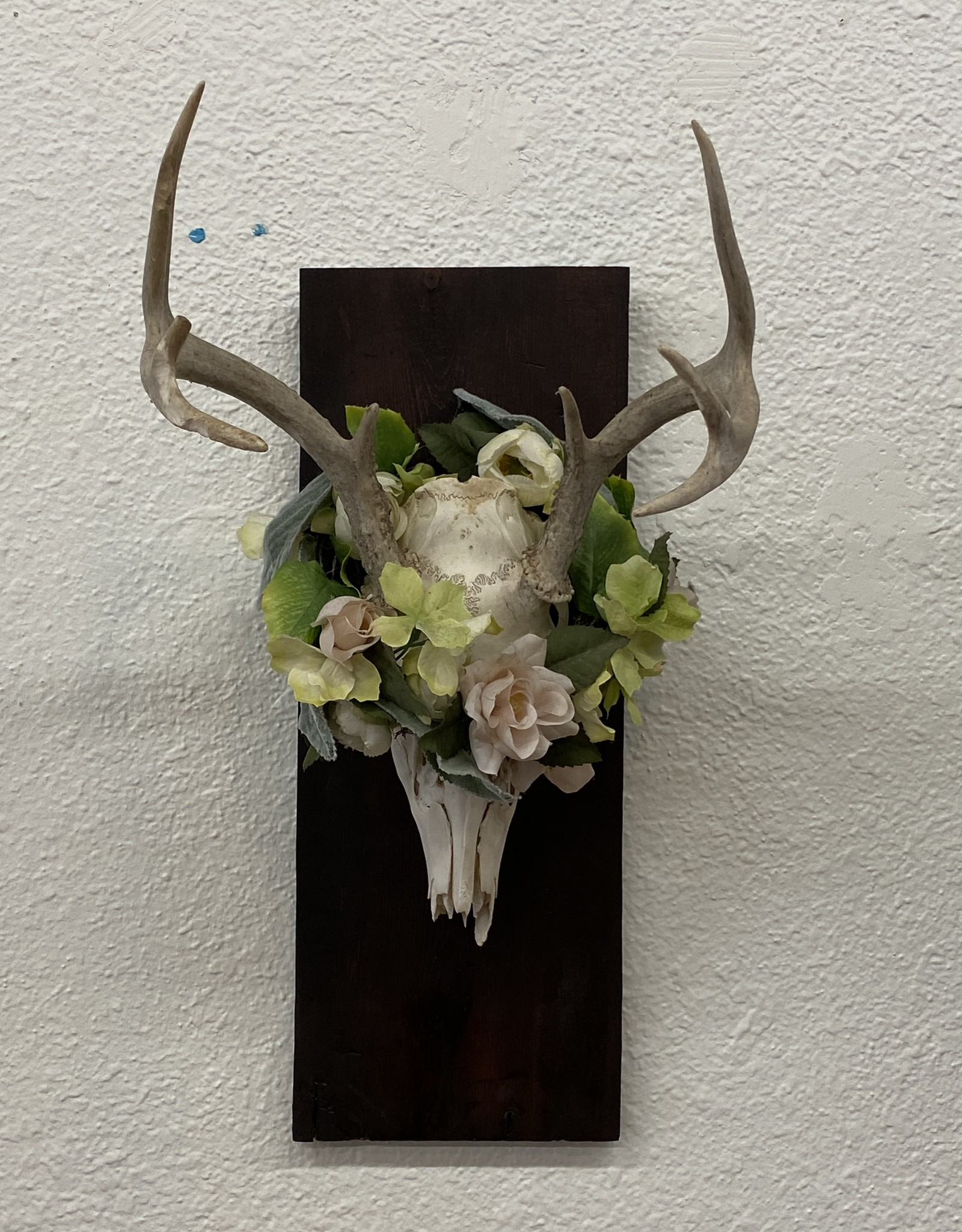 Prairie Harbor Deer Skull for Taylor