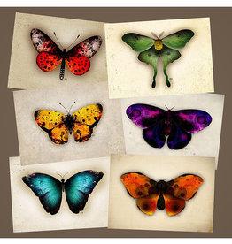 Bryan Fyffe Butterflies + Moths Prints // Bryan Fyffe