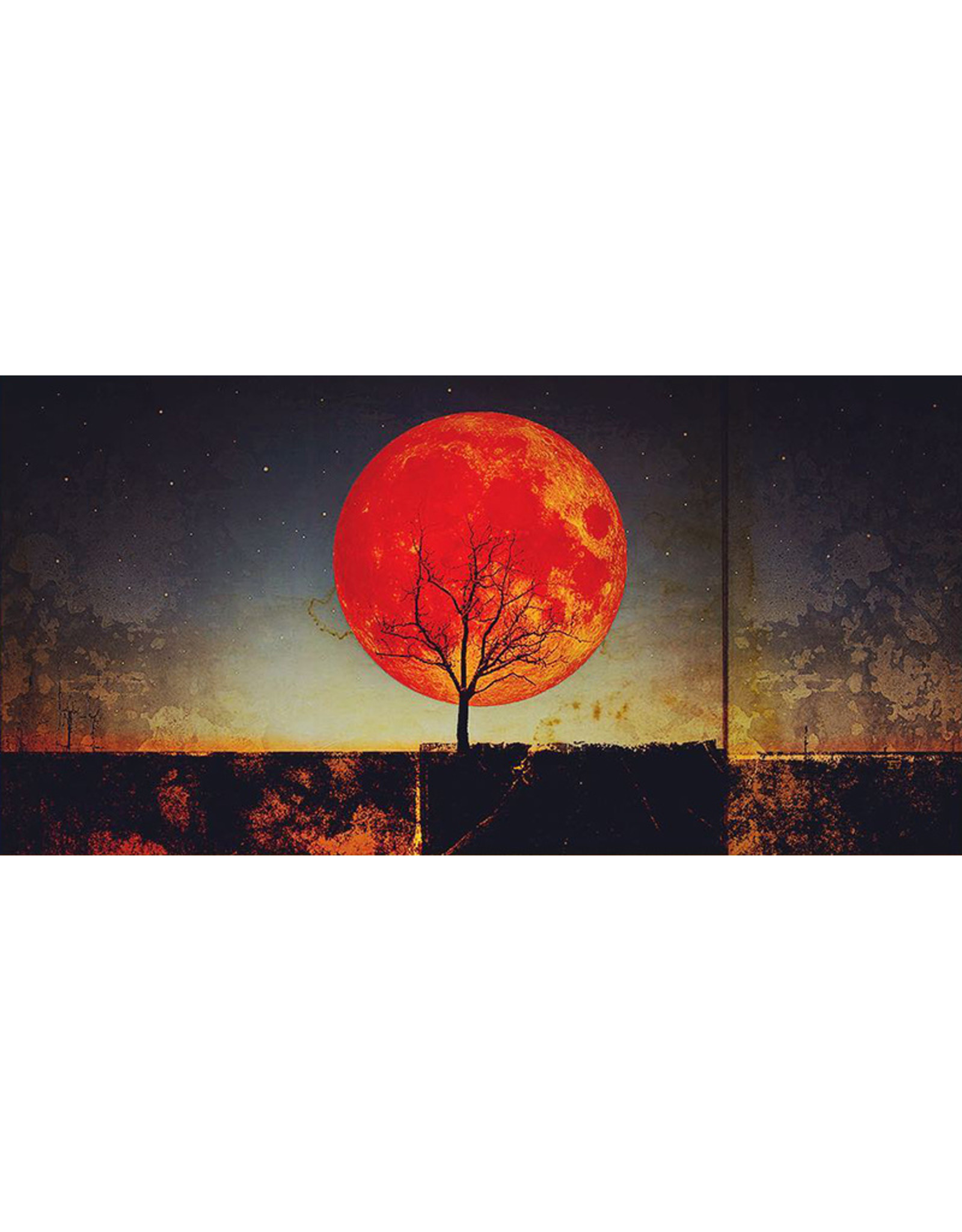 Bryan Fyffe Roots of Earth Series // Bryan Fyffe