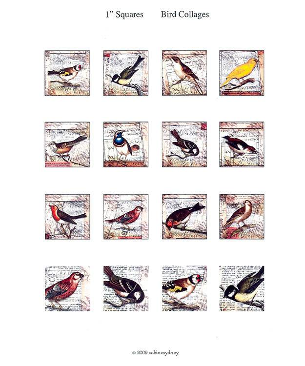 CE7213 = ITS Image Collage - Bird Pictures