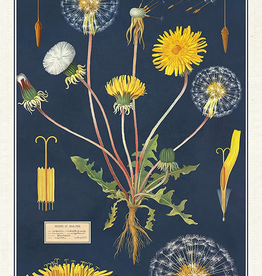 Cavallini Papers-Dandelion Tea Towel