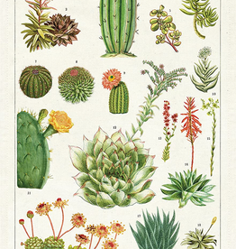 Cavallini Papers-Succulents Tea Towel