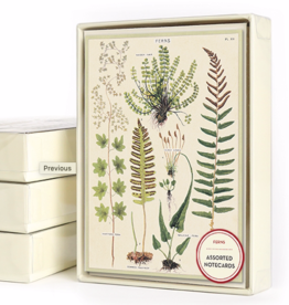 Ferns Assorted Designs - Boxed 8