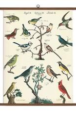 Vintage Style School Chart - Birds