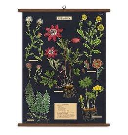 Vintage Style School Chart - Herbarium