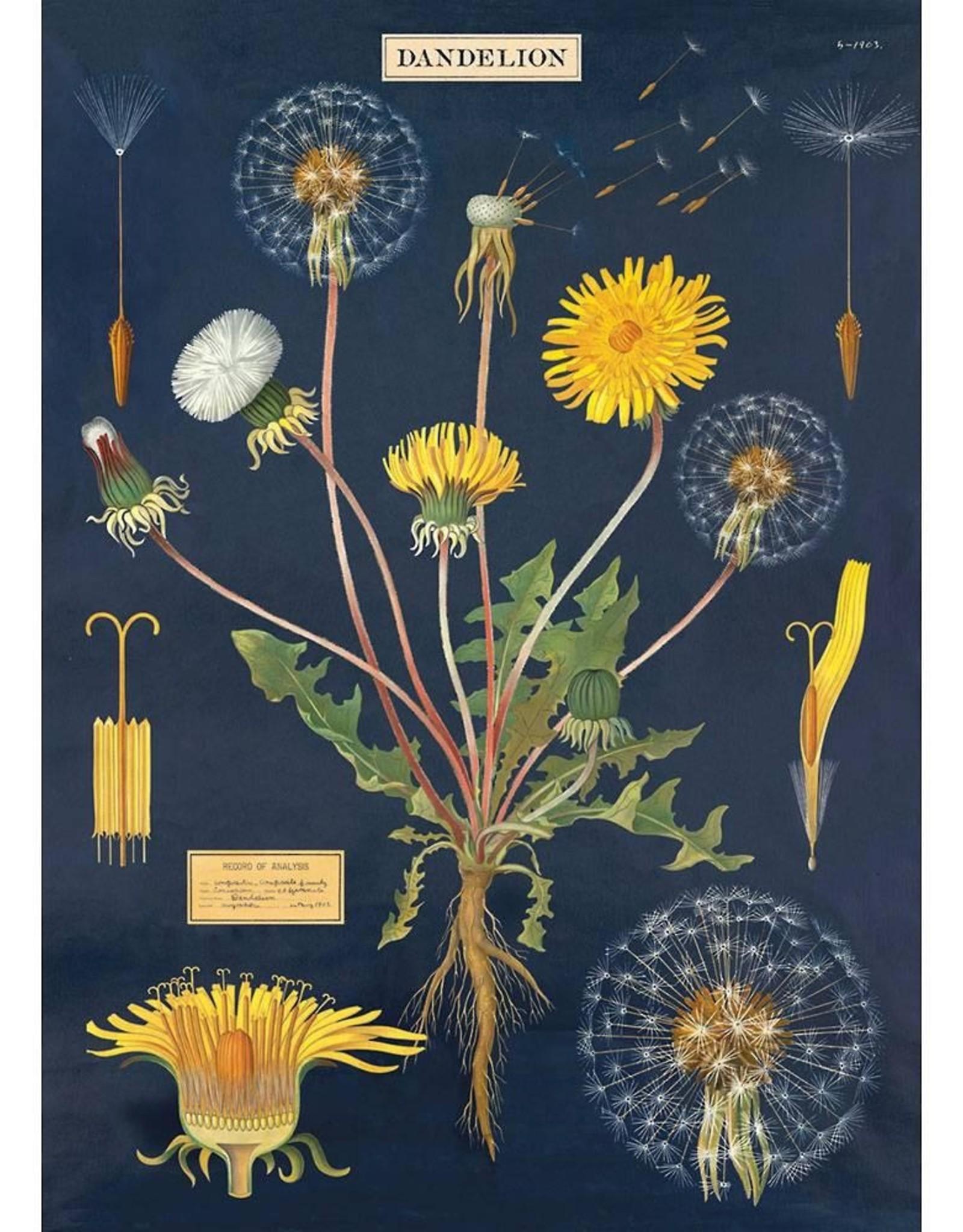 Poster Wrap Sheet - Dandelion