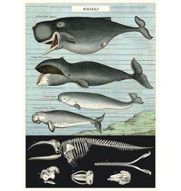 Poster Wrap Sheet - Whales