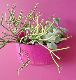 Wall Planter Unit - Dragonfruit Pink