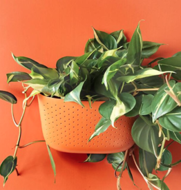 Wall Planter Unit - Flame Orange