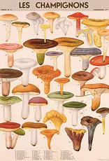 Mushrooms Poster Wrap