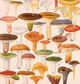 Mushrooms Poster Wrap