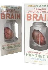 Growing Brain Toy
