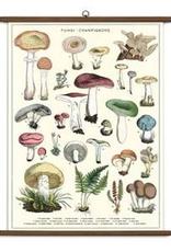 Vintage Style School Chart Mushrooms