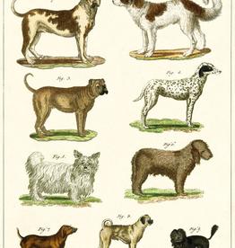 Dog Chart Poster Wrap