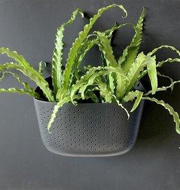 Wall Planter - Charcoal