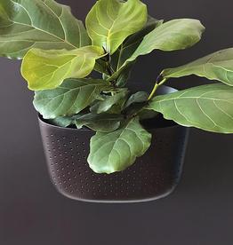 Wall Planter - Espresso
