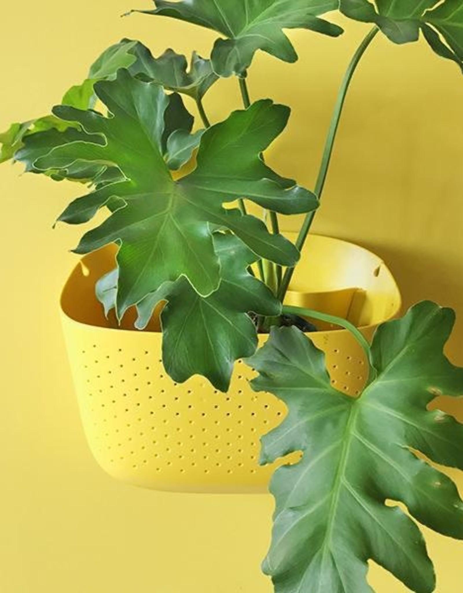 Wall Planter - Sunflower