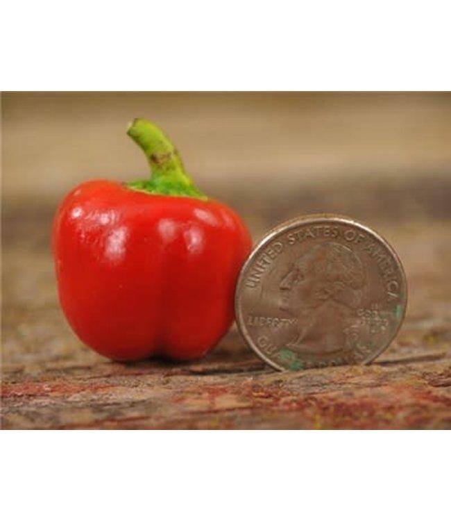 Baker Creek Bell Peper - Red Mini Seed