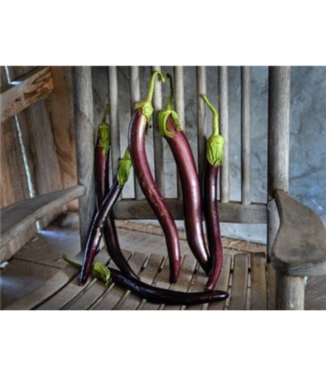Baker Creek Eggplant - Snake Of Mugla Seed