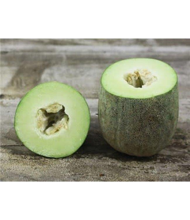 Baker Creek Melon - Bateekh Samara Seed