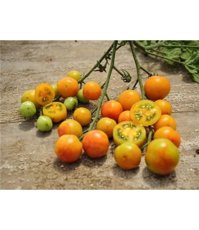 Baker Creek Tomato - Isis Candy Cherry Seed