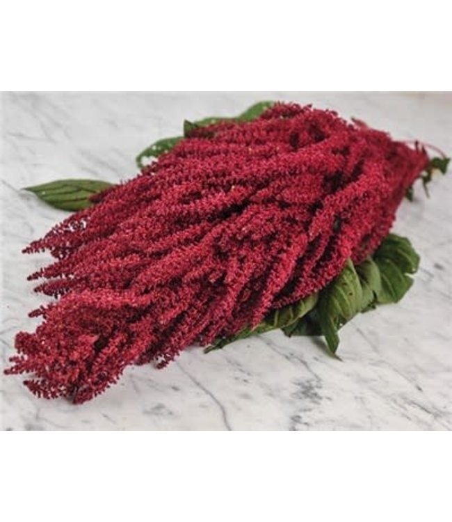 Baker Creek Amaranth - Elena's Rojo Seed