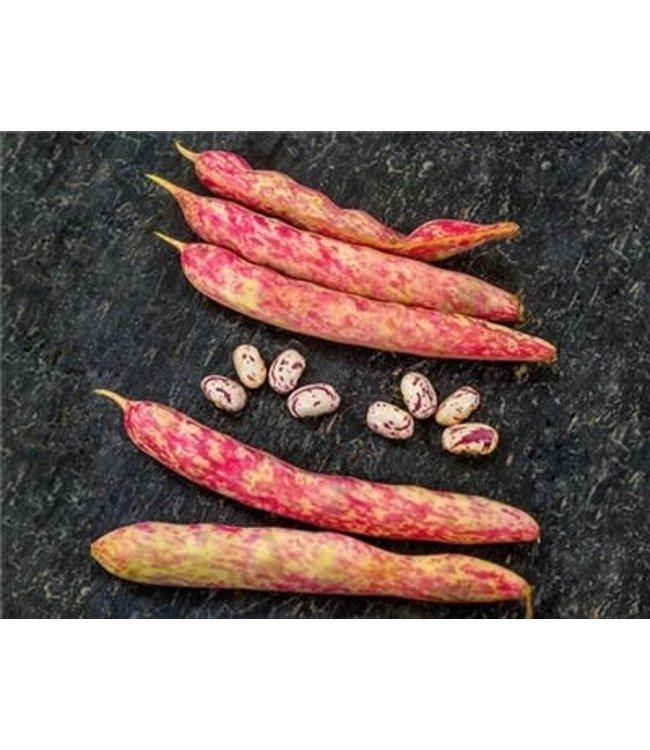Baker Creek Bean - Borlotto Di Vigevano Nano Seed