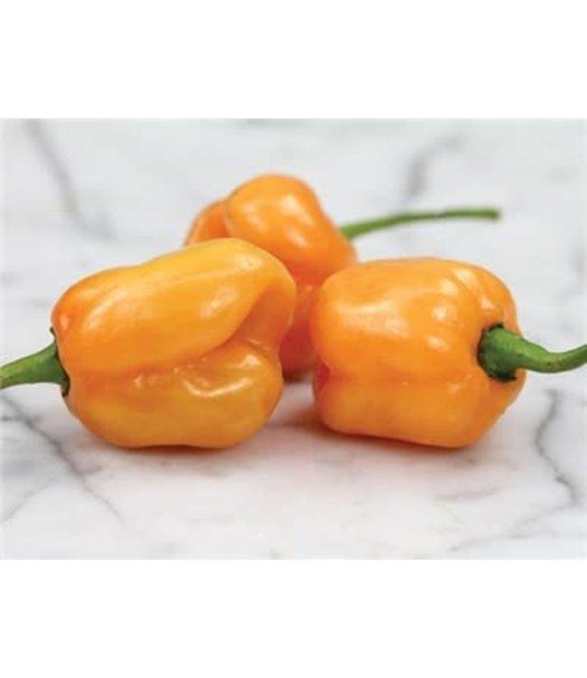 Baker Creek Hot Pepper - Peach Habanero Seed