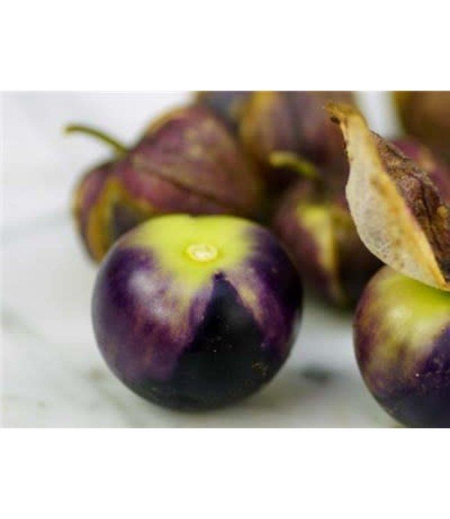 Baker Creek Tomatillo - Purple Coban Seed