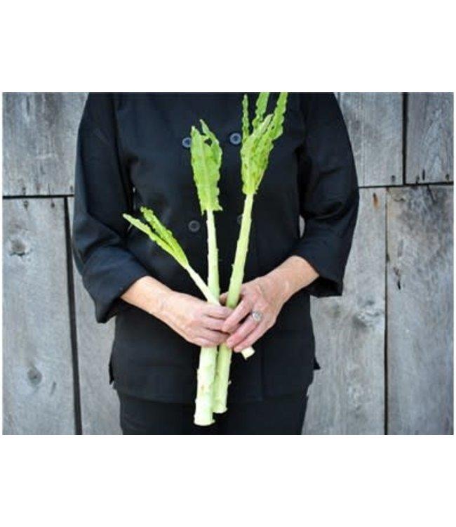 Baker Creek Lettuce - Celtuce Seed