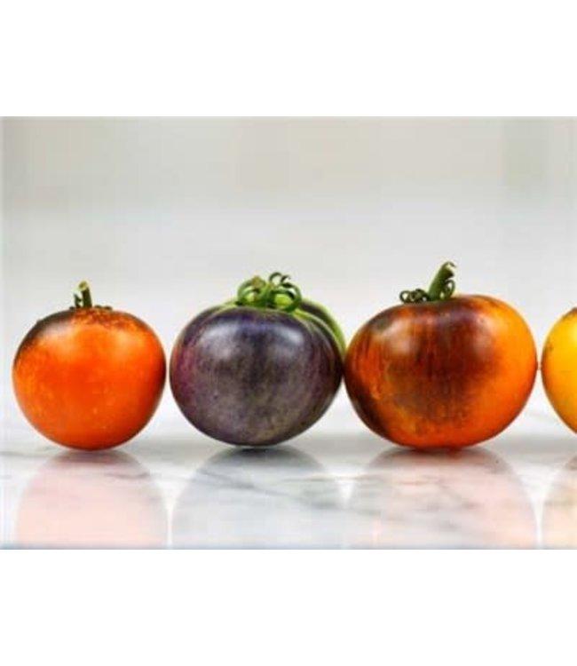 Baker Creek Tomato - Indigo Apple Seed
