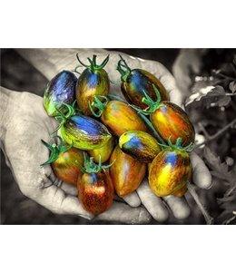 Tomato - Brad's Atomic Grape Seed