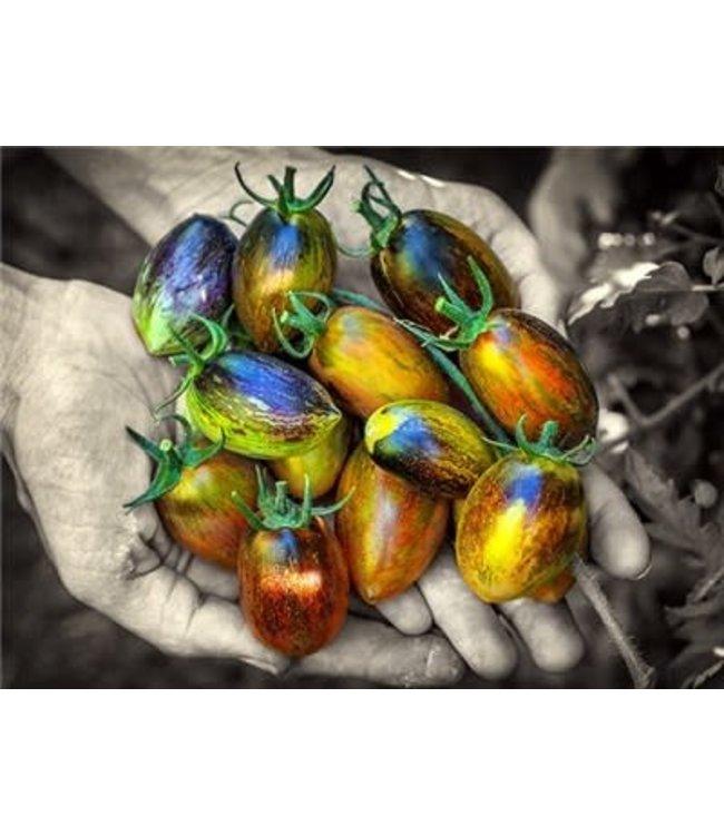 Baker Creek Tomato - Brad's Atomic Grape Seed