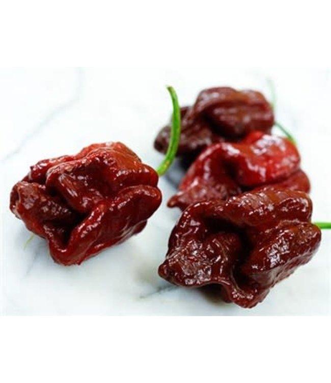 Baker Creek Hot Pepper - Trinidad Scorpion (Chocolate)