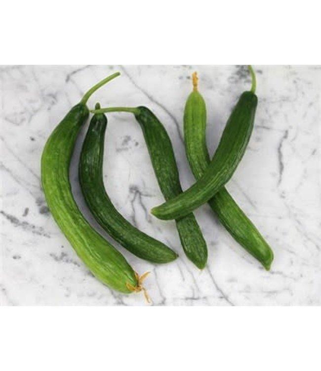 Baker Creek Cucumber - Telegraph Improved Seed