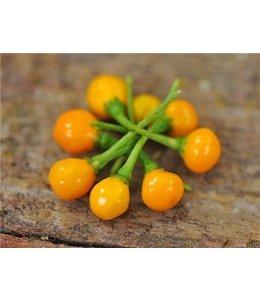 Baker Creek Hot Pepper - Aji Charpita Seed