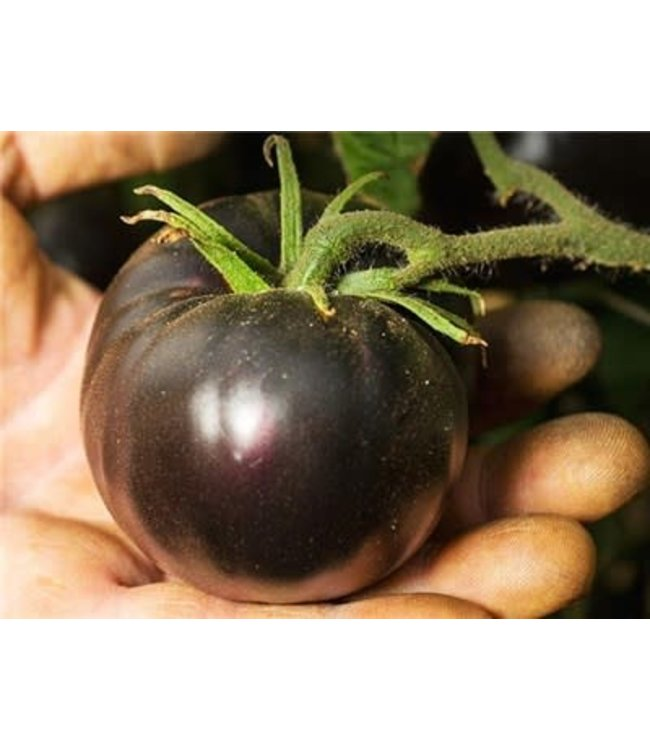Baker Creek Tomato - Black Beauty Seed