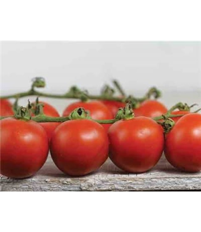 Baker Creek Tomato - Chadwick Cherry or Camp J Seed