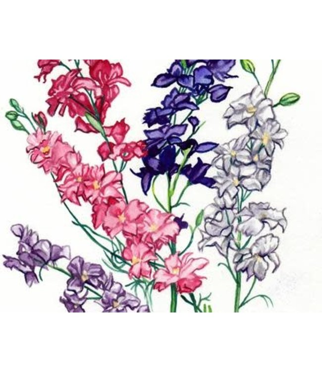 Southern Exposure Larkspur - Galilee Mix