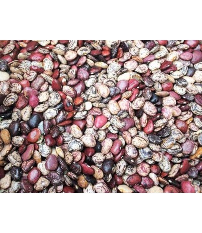 Southern Exposure Bean - Violet's Multicolored