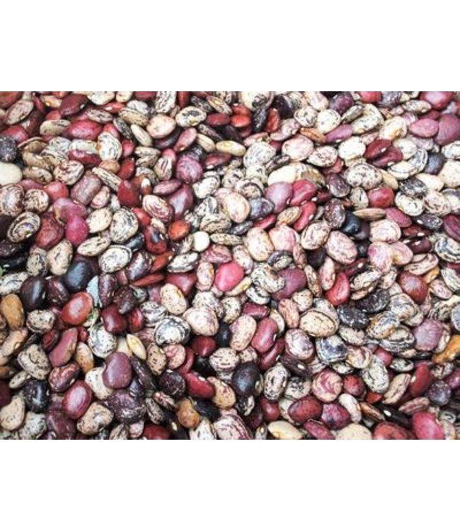 Lima Bean - Violet's Multicolored Butterbeans