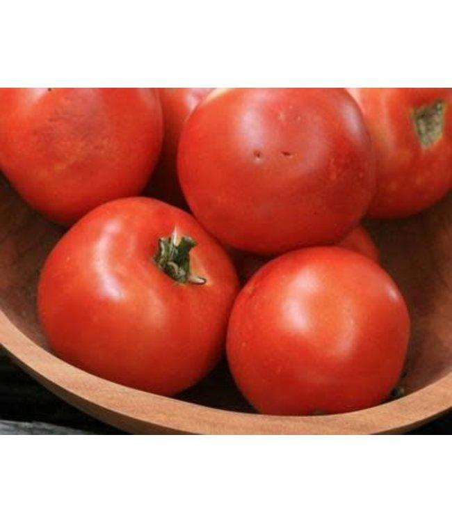 Southern Exposure Tomato - Heinz 1350 VF