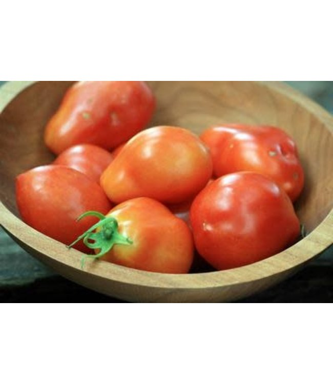 Southern Exposure Tomato - Roma VF