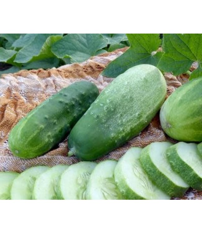 Cucumber - Homemade Pickles