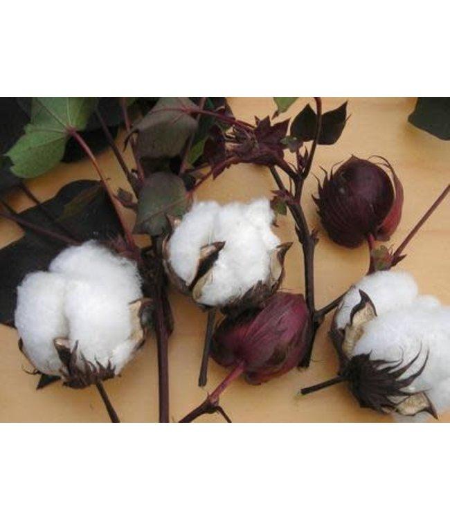 Cotton - Red Foliated White