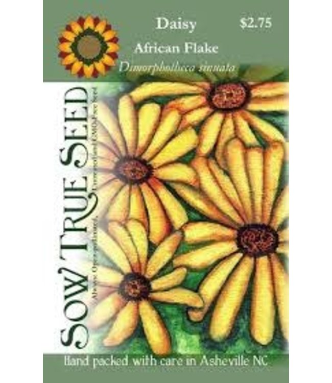 Sow True Seed Daisy - African Flake