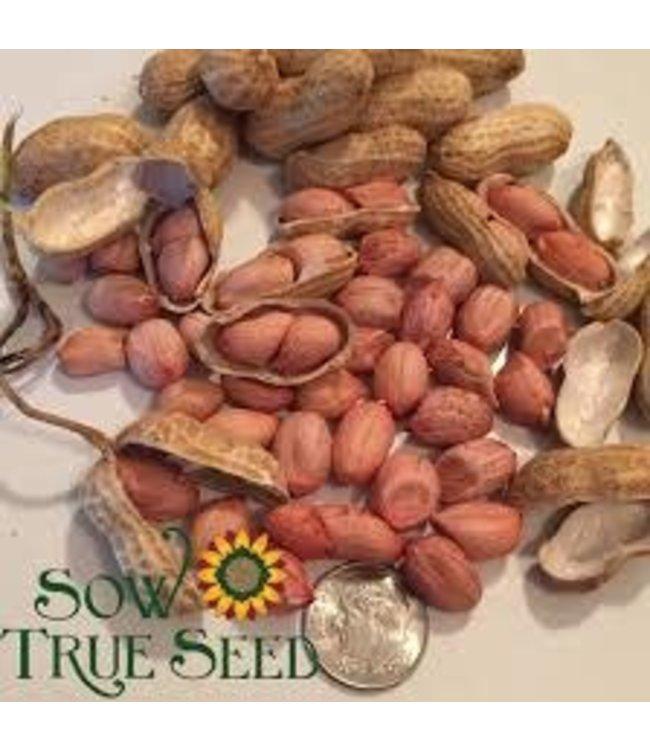 Sow True Seed Peanuts - Carolina African Runner