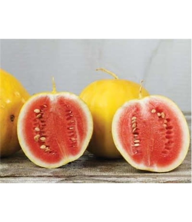 Baker Creek Watermelon - Royal Golden