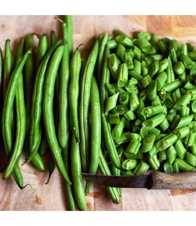 Sow True Seed Bush Bean - Maxibel Hericot Vert