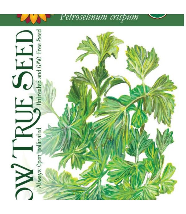 Sow True Seed Parsley - Italian Giant Organic